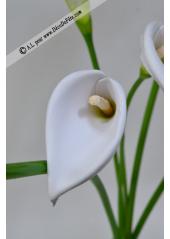 1 arum calla blanc MOYEN