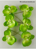 6 Petites Orchidées PERLE vertes