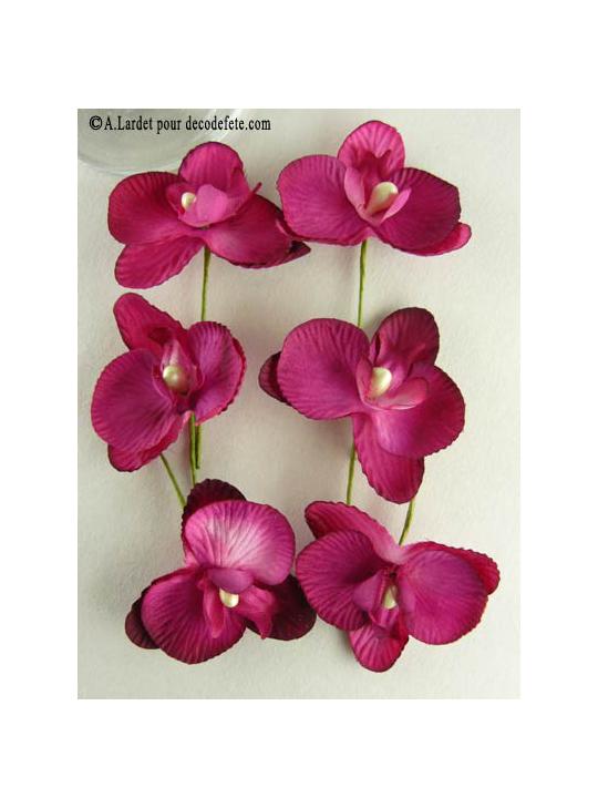 orchidee fushia