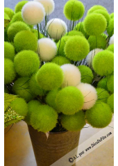 1 branche de 2 pompons vert anis