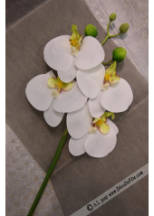 1 MINI Branche d'orchidée coeur anis
