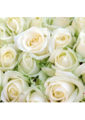 20 Serviettes brassée de roses