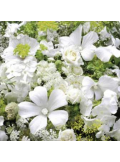 20 Serviettes Fleurs Romance
