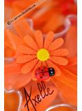 6 Stickers Marguerites Orange & Coccinelle