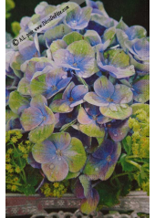 20 Serviettes Imprimées Hortensia