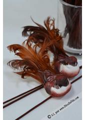 2 oiseaux inséparables majestueux chocolat