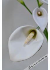 1 arum calla blanc GRAND