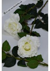 1 rose blanche MARLENE