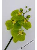 1 MINI Branche d'orchidée verte