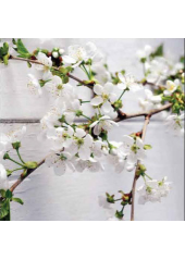 20 Serviettes Douceur Cerisier Blanc