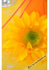 2 fleurs de tournesol