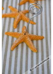 1 Porte nom étoile de mer