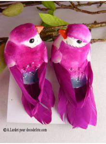 2 oiseaux inséparables fushia