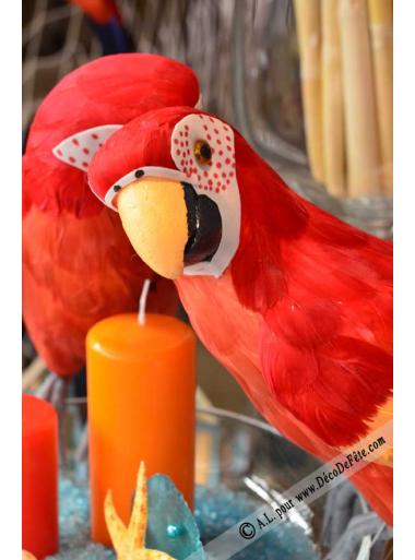1 perroquet COCO