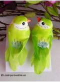 2 oiseaux inséparables vert anis