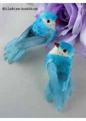 2 oiseaux inséparables turquoise