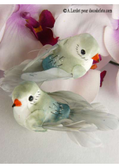 2 oiseaux inséparables gris