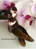 2 oiseaux inséparables chocolat