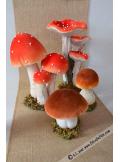 1 champignon brun ouvert 12cm