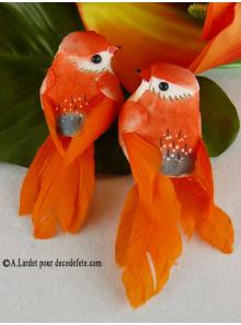 2 oiseaux inséparables orange