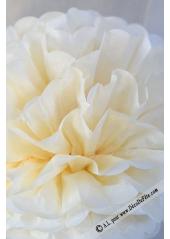3 fleurs pompon papier ivoire 30cm