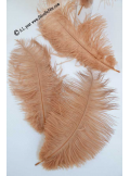 5 plumes d'autruche CARAMEL 20cm