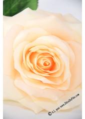 1 rose  Mylène champagne