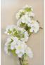 1 branche de pommier en fleur blanc