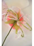 1 petite rose JULIA rose