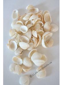 160 Gr coquillage BLANC