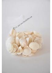 160Gr coquillage BLANC