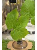 5 feuilles de vigne