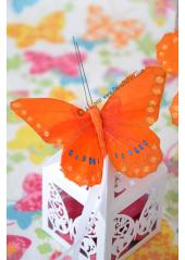 2 papillons Wendy orange