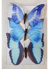 3 papillons exotiques bleus