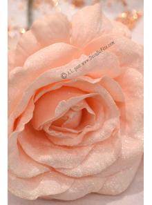 1 Rose ROMY rose