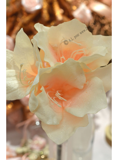 1 amaryllis ivoire 50cm for Amaryllis jaune
