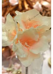1 Amaryllis ivoire 50cm