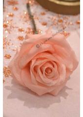 1 Rose ISABELLA rose