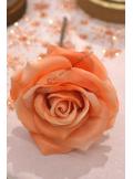 1 Rose ISABELLA pêche