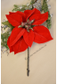 1 Poinsettia ROYAL velours rouge