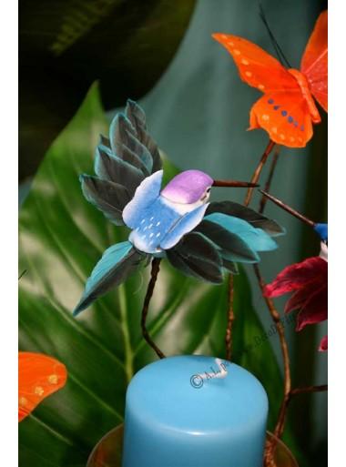 1 colibri turquoise
