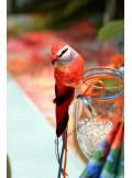 1 petit perroquet rouge