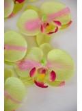 6 Orchidées MAO ling