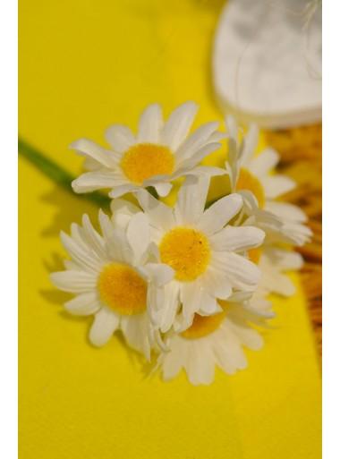 6 belles Marguerites blanches