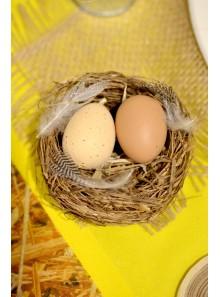 1 nid et 2 oeufs