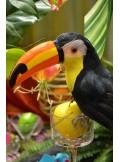 1 toucan NICO