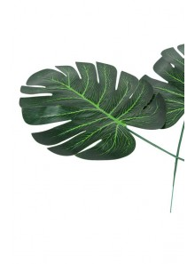 1 grande feuille MONSTERA