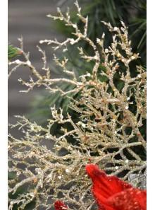 3 mini branches de corail OR
