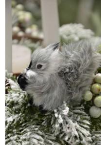 1 écureuil GRISOU