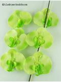 6 Orchidées vert anis